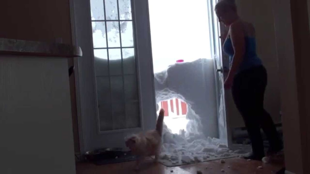 雪のカベを突き破って、エサを食べに来る猫
