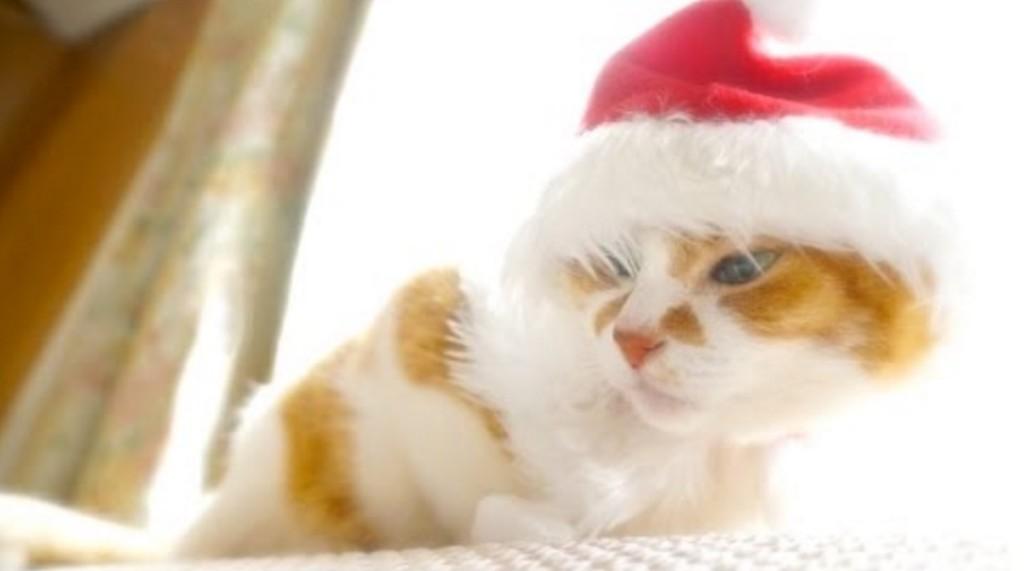 すべての人にクリスマスを。サンタ帽子の猫ちゃんがお出迎え。