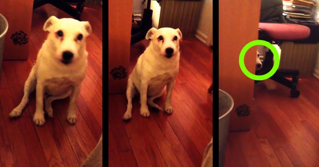 これは許すしかない。。叱られた犬の逃げ方が可愛すぎるwwwwwwww