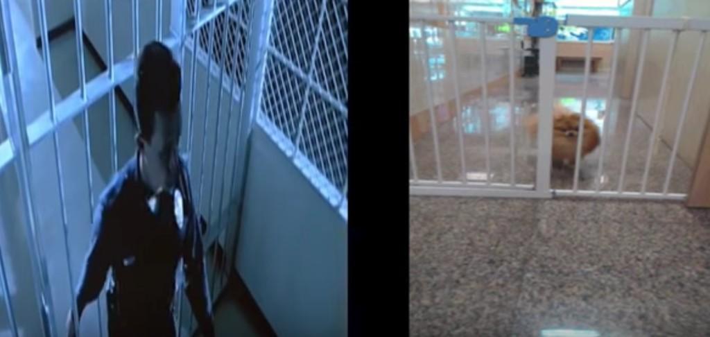 フェンスをすり抜けるターミネーターみたいな犬が登場し、次々とコラボ動画が生まれるwwwwwwww