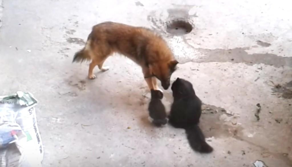感動の瞬間!姿形も全然違う古い友人に、自分の子猫を紹介しに訪れた母猫