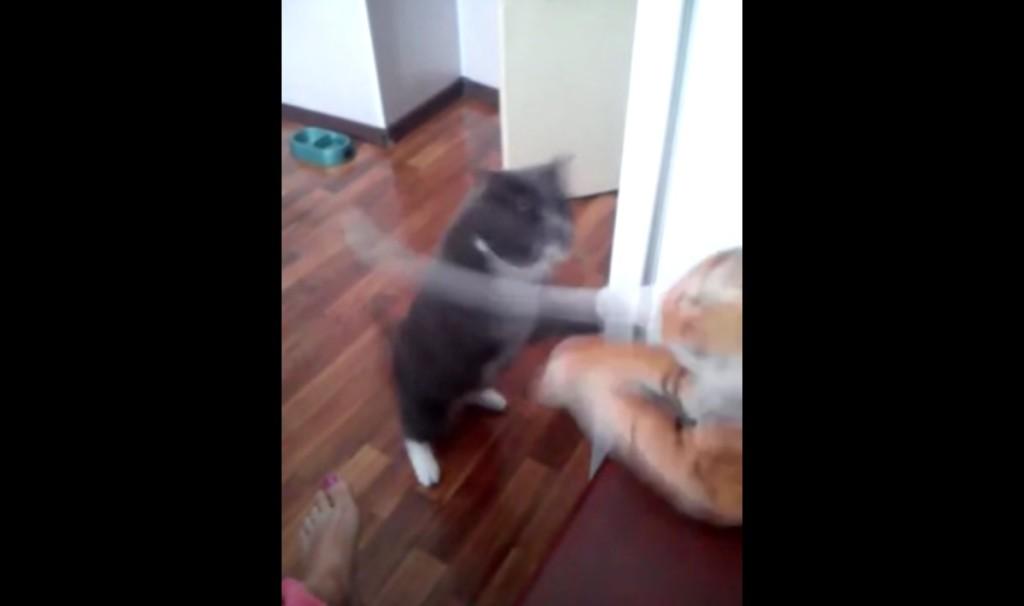 【爆笑】猫がトラのぬいぐるみを見た途端、予想外の行動にwwwwwwww