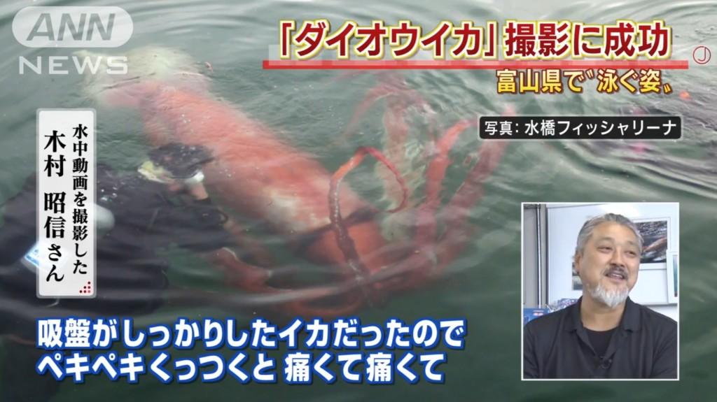 富山湾に生きた「ダイオウイカ」が迷い込み、大迫力の水中映像が撮影される!!
