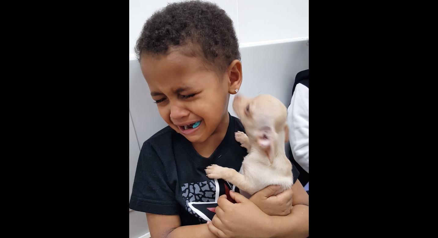 なんて心の美しい少年。。子犬を抱く少年が泣いている理由がとても純粋で泣けてくる