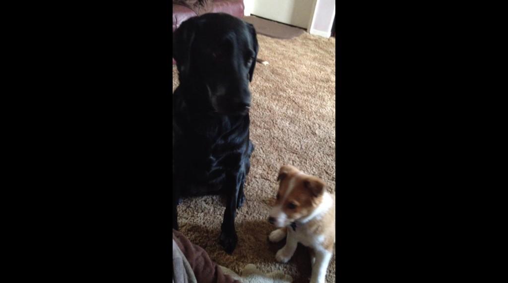 2匹の犬に「あなたの親友は誰?」と聞いたら、最高のリアクションをしてくれた!!