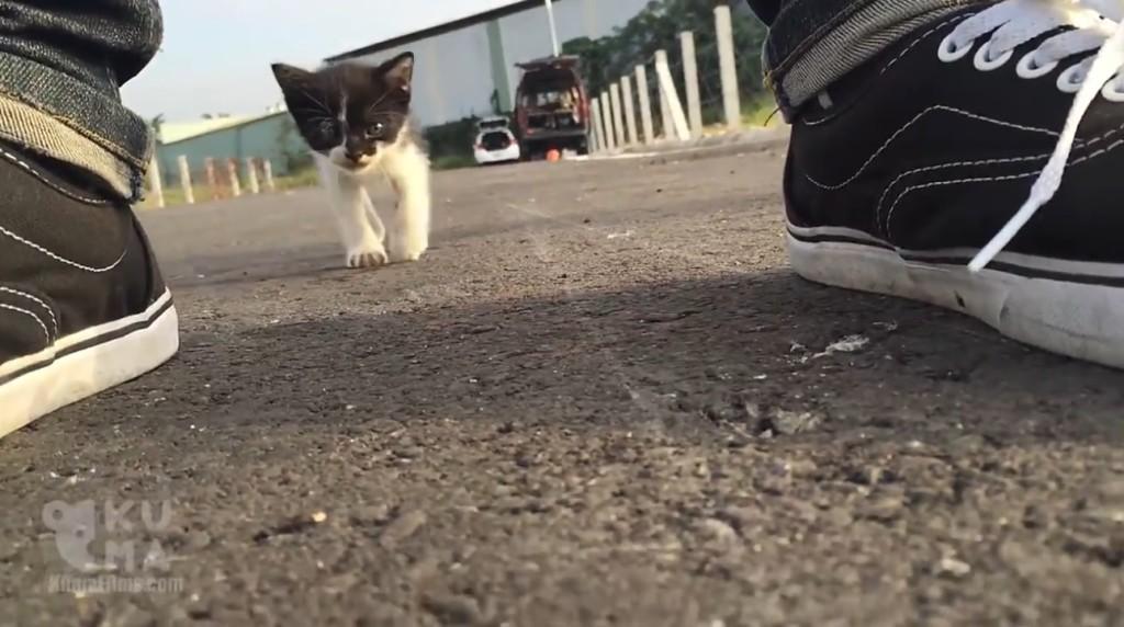 ヨチヨチどこまでもついてくる野良猫の子猫。。その後どうなってしうまう?!