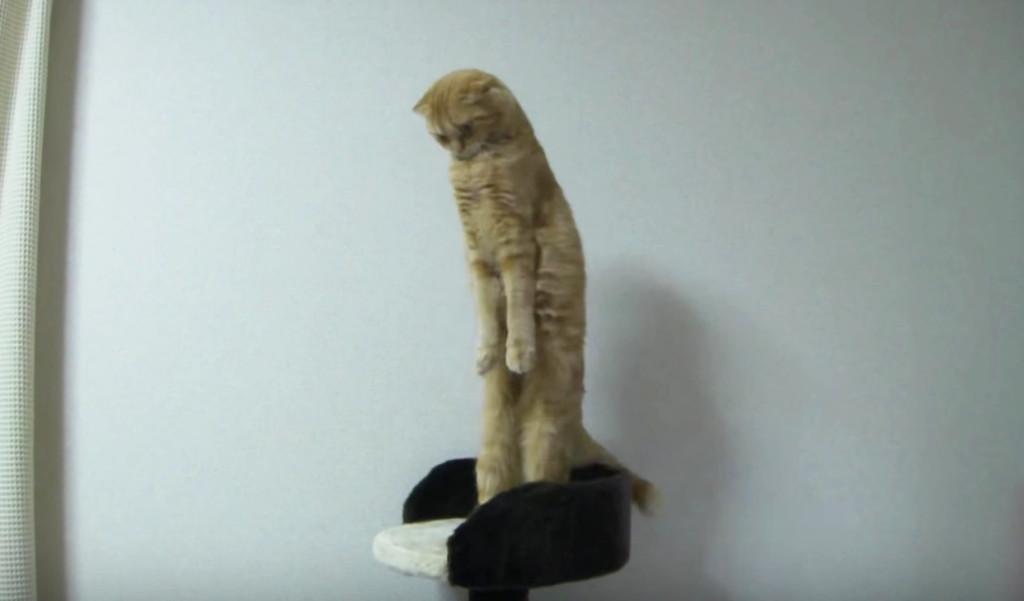 伸びのやり方を間違えている不思議な猫