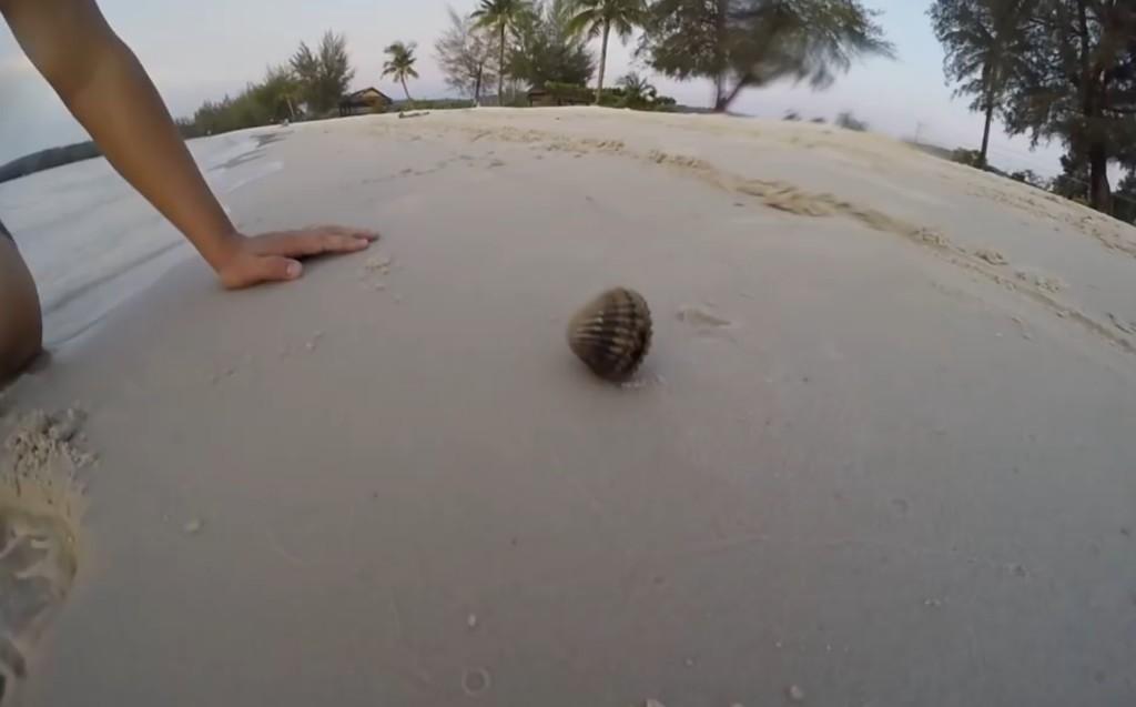 一見ただの小さな貝。しかし、貝のサイズからは考えられない大きな「ヤツ」が潜んでいた!!