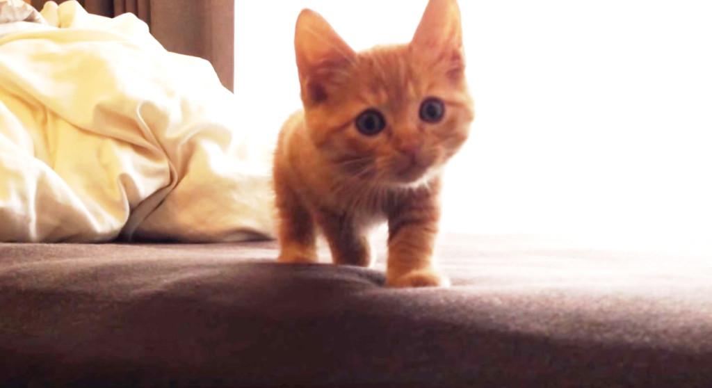 【キュン死】子猫を呼んだら超スローモーションでやって来た!!