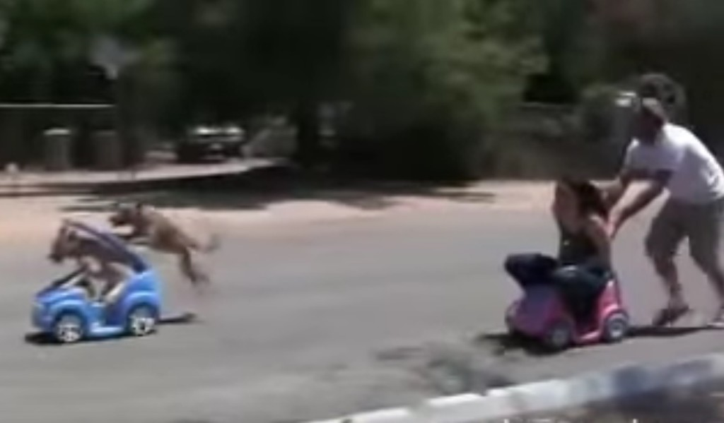 犬チーム vs 人間チームでドラッグレース!果たして勝敗は?!