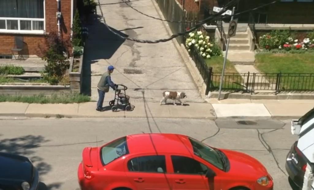 歩くのがとてもゆっくりなおじいさんと、気遣う犬の散歩風景にほのぼの