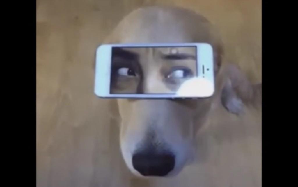 ワンコの顔の上で「人間の目元の動画」を再生した結果wwwwwwww
