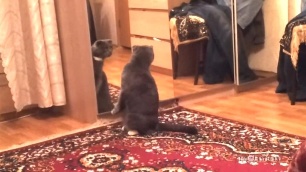 「これが自分、、だと?」初めて鏡を見た猫の反応が面白いwwwwwwww