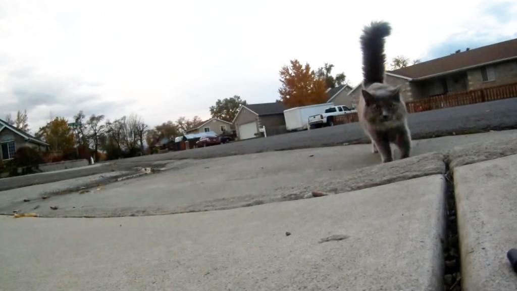 ドローンが墜落!速攻で猫とイタズラ好きの女の子たちの餌食にwwwww
