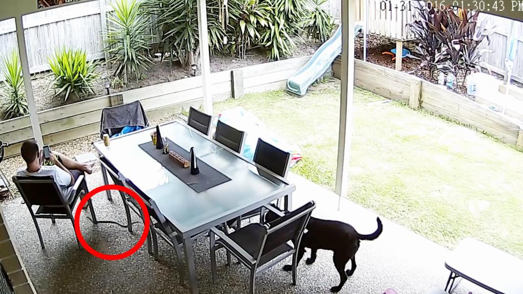 猛毒のヘビが近づいていることに気づかない飼い主に、犬がとった勇敢な行動が話題に!!