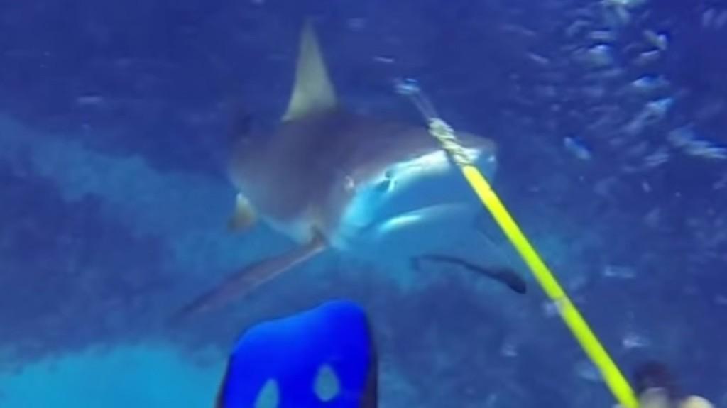 海中でサメに襲われ「モリ」で応戦!何度もしつこく攻撃してくる、、