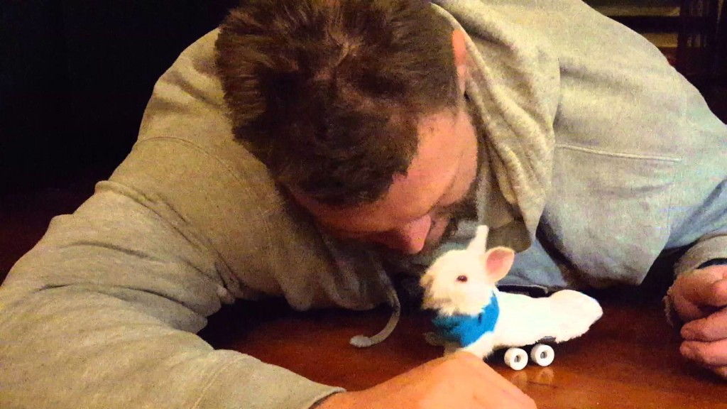 下半身が麻痺してしまったウサギ。飼い主が考えた心優しいアイディアが話題に!
