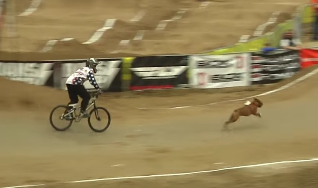 犬走るの速すぎ!BMX vs 犬のガチンコ勝負!!