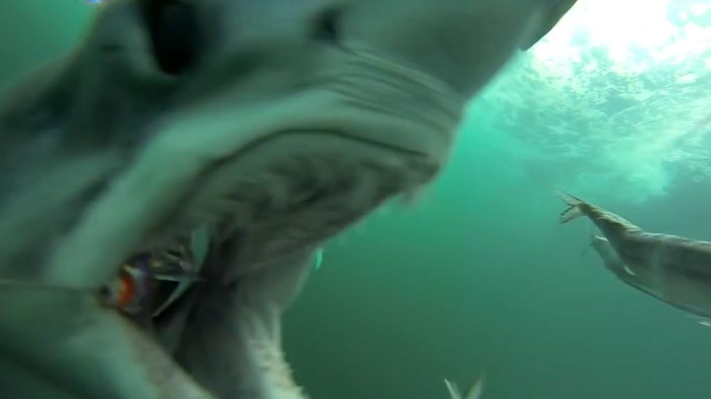 ルアーに仕掛けたカメラで撮った、サメが食いついてくる様子がヤバイ!凄いスピードで追ってくる!!