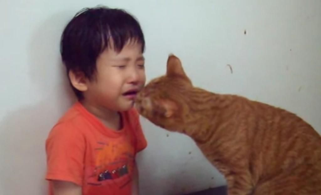 「泣かニャいで!」自分の食事そっちのけで、泣いている男の子を慰める優しい猫!!