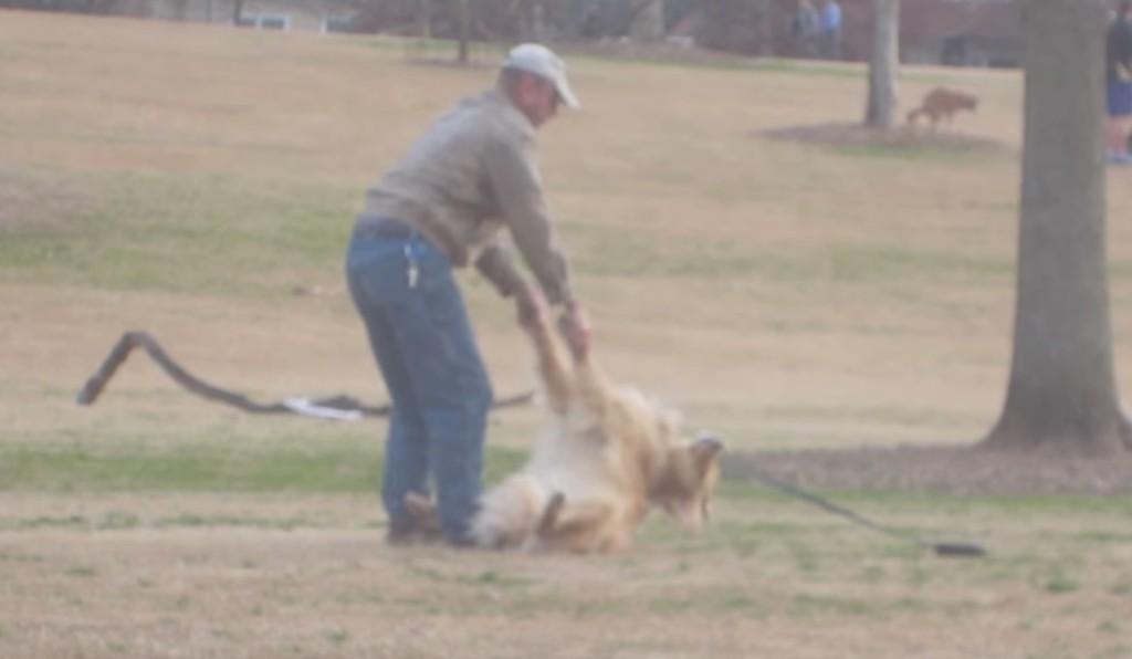 【爆笑】どうしても公園から帰りたくない犬の「帰りたくないアピール」が凄すぎるwwwwww