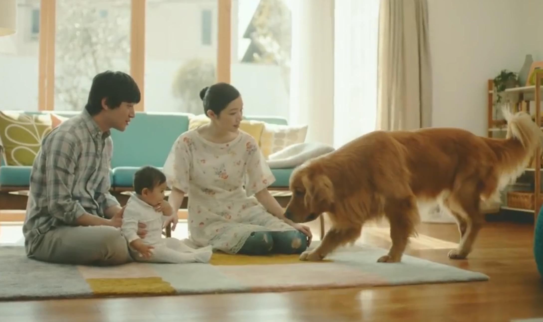【Amazonの泣けるCM】産まれた赤ちゃんに夢中のパパとママ。切なそうにしている犬に気付いたパパが贈った、最高のプレゼントとは、、?