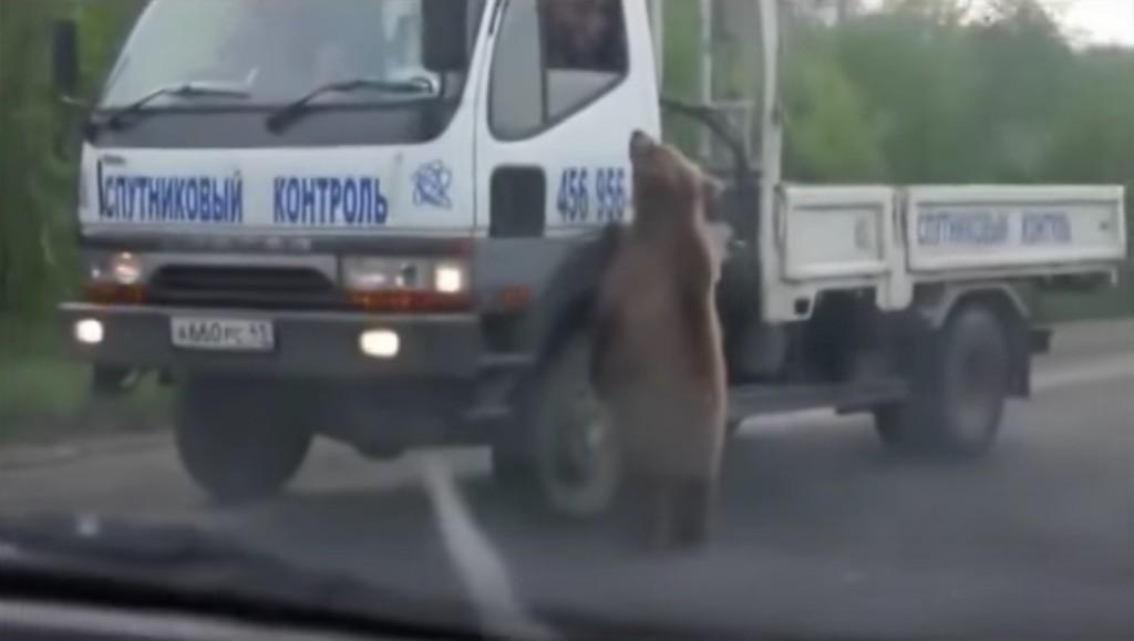 【ロシア】前方に熊に襲われているトラックが?!よく見たら違うぞ、、