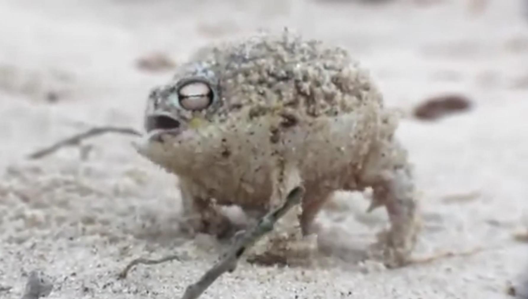 わらび餅みたいに丸っこくて、猫みたいに鳴くカエルが可愛いすぎ!!