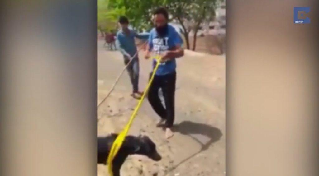 カナヅチの男性が溺れている犬を救助し「ヒーローだ」と話題に!泳げない男性が犬を助けた方法とは?!