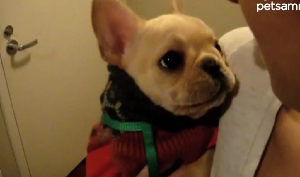 犬が喋った!愛犬に話しかけたら、まさかの返答に飼い主さんもびっくり!!