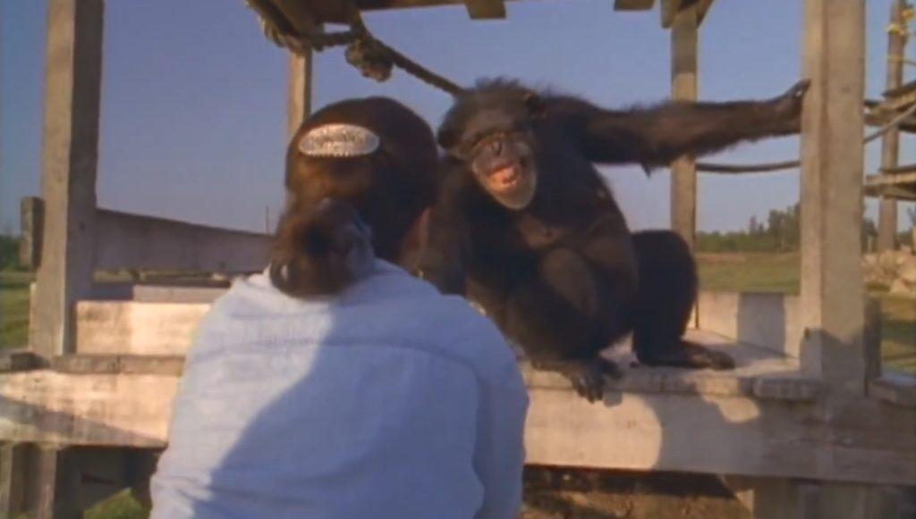 研究施設から救ってくれた女性と20年ぶりの再会。チンパンジーの対応に涙。。