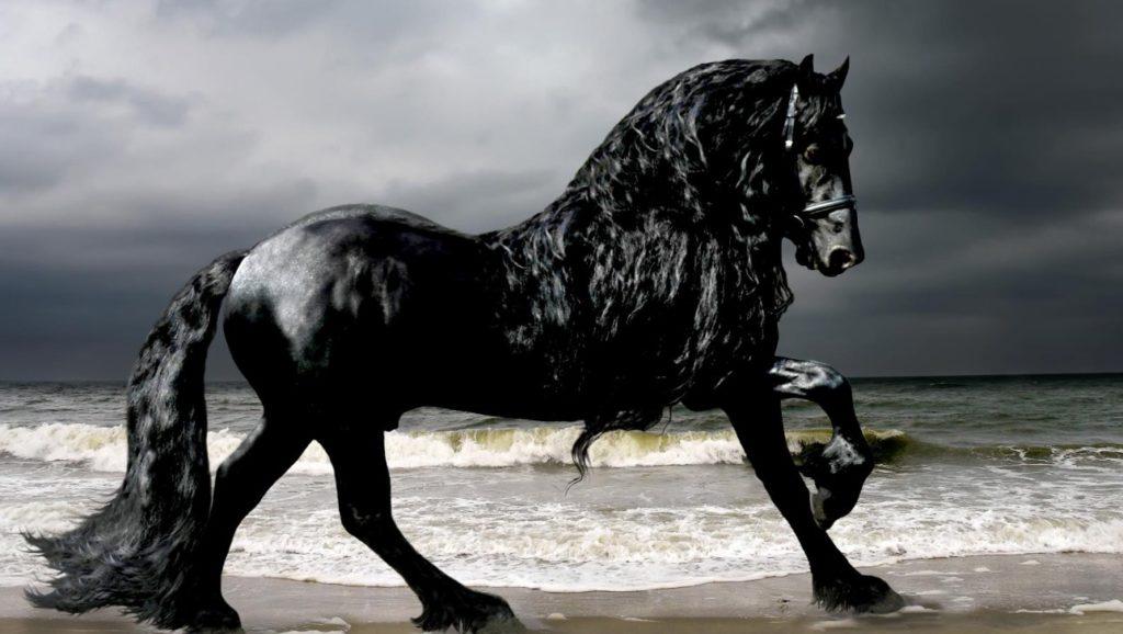 「神が地球上に創造した最も美しい動物」。漆黒の馬フレデリック・ザ・グレートの美しさに言葉を失う、、