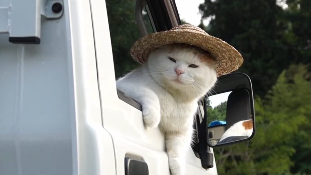 よぉ!まるで農家のおっちゃんみたいに軽トラから顔を出す猫がかわいいw