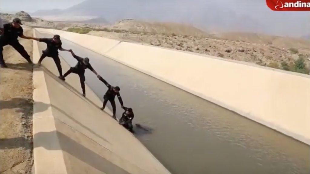 ペルーの国家警察が溺れそうな子犬を救おうと奮闘!難航する救助の末、一人の警察官が、、!!