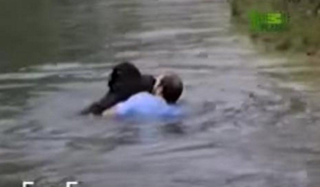 動物園で池に落ちて溺れてしまったチンパンジー。一人の男性が危険を顧みず檻に飛び込んだその理由とは?