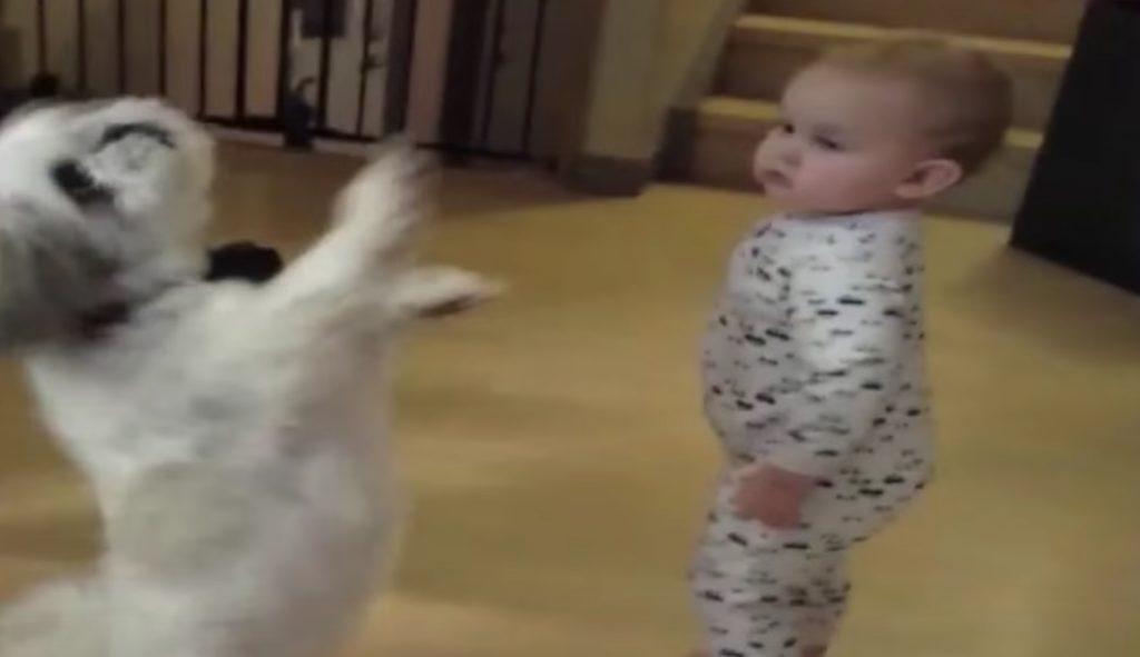 二本足でクルクル回る犬。それを見た赤ちゃんの行動が話題にw
