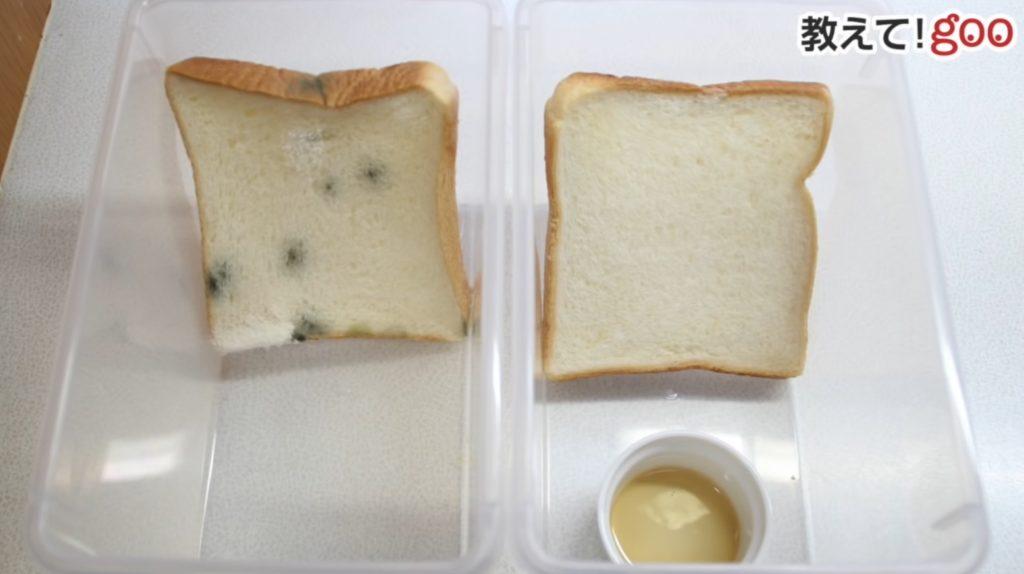 【裏技】○○と一緒に保存するだけ!60日間放置しても食パンにカビが生えない方法!!