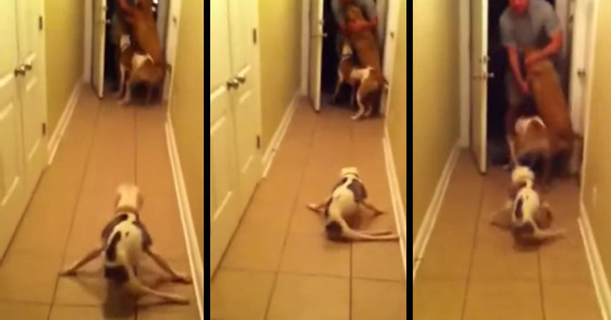 【感動】足の不自由な犬が、パパとの半年ぶりの再会に歓喜!一生懸命歩みよる姿に涙