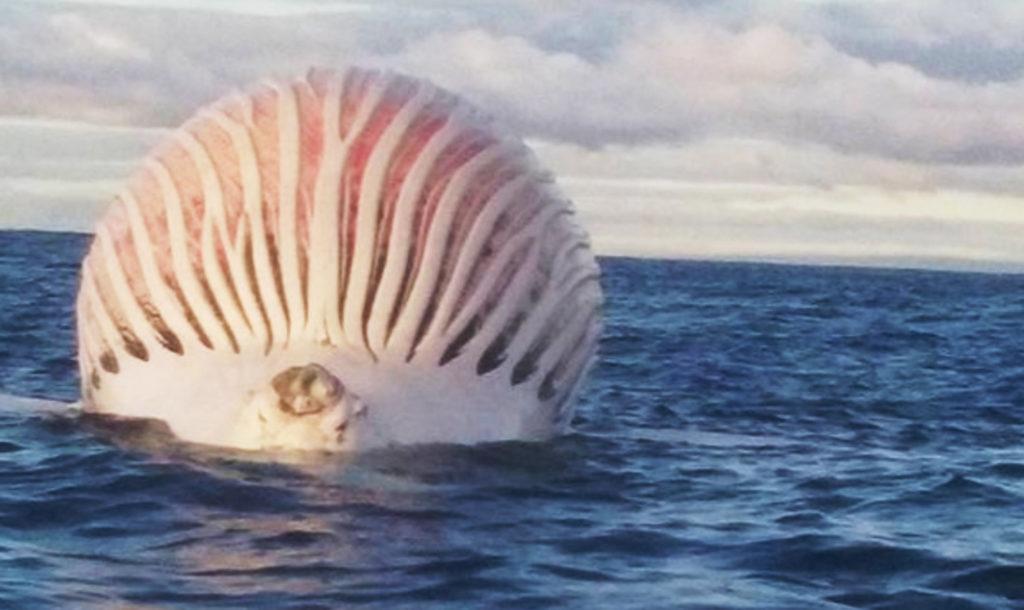 エイリアン?!海に浮かぶ巨大な謎の球体に釣り人もびっくり!その正体は、、?!