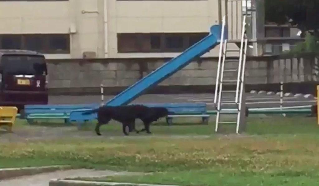 誰もいなくなった公園にいた2頭の犬。その行動が可愛すぎると話題にwwwwwwwww