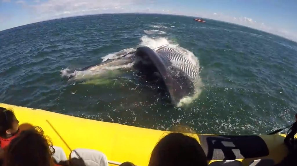 ホエールウォッチングを楽しむ人々。すると一匹の巨大クジラが口を大きく開けて向かってきて、、