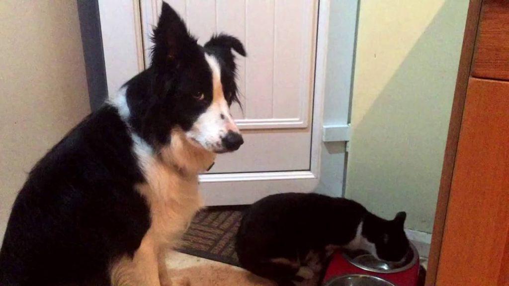 トントンする犬を無視し続け、エサを横取りする猫。犬の切ない表情に涙。。