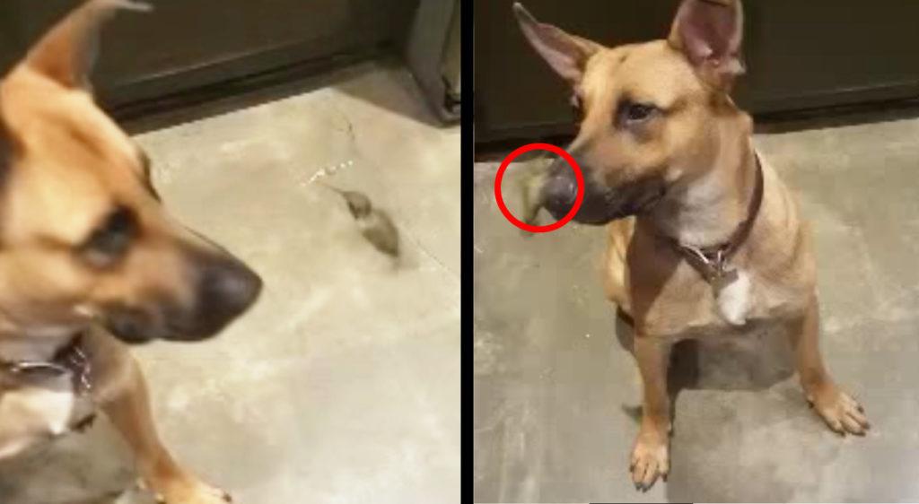 路上で瀕死のハチドリを救った犬。その後彼らは深い信頼関係で結ばれた。