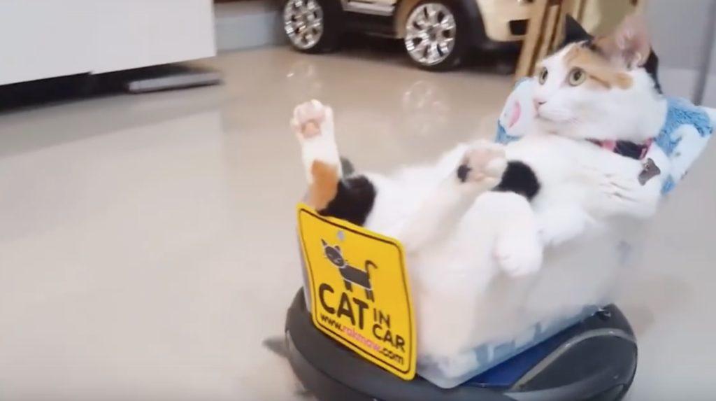 「極楽にゃー!」猫専用の座椅子が付いたVIPなルンバで満足げな猫wwwwwww