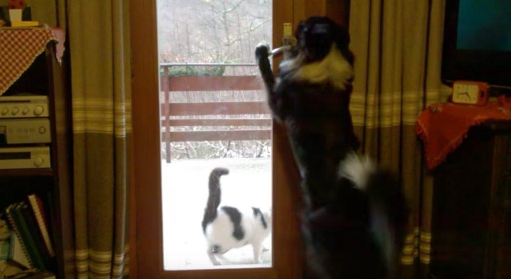 猫を完璧な作法でエスコートする「紳士的すぎる犬」にびっくり!!