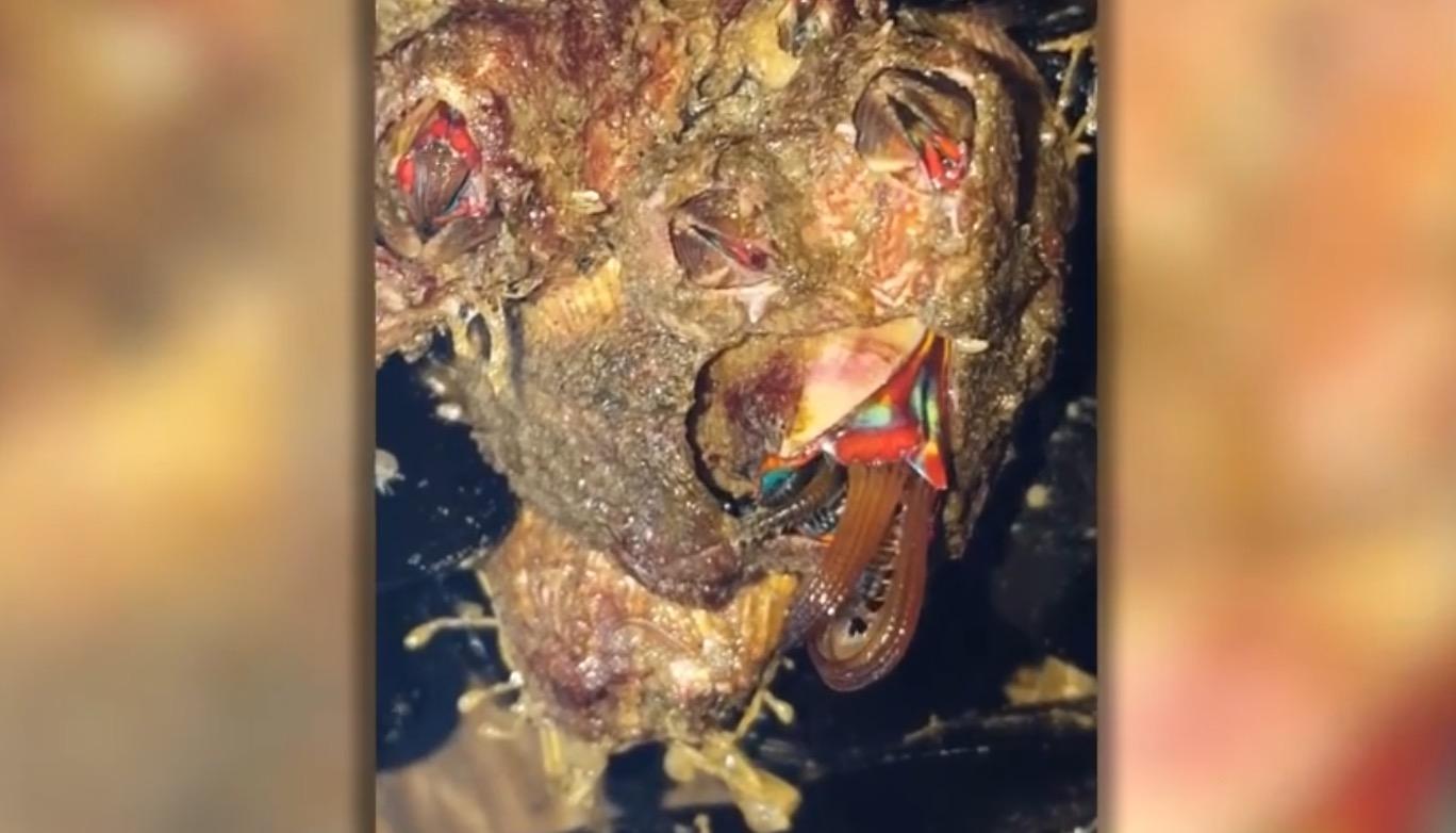 カリフォルニアで宇宙生命体のようなヤバすぎる生物が捕獲される!!