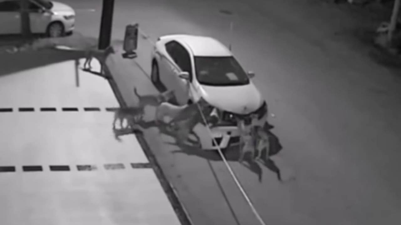 野犬の群れが車をボロボロに破壊!しかし、その理由を知って感動!!