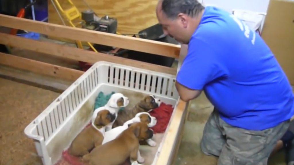 おじさんの「子守唄」で子犬たちが眠りに落ちる驚きの映像!まるで魔法!!
