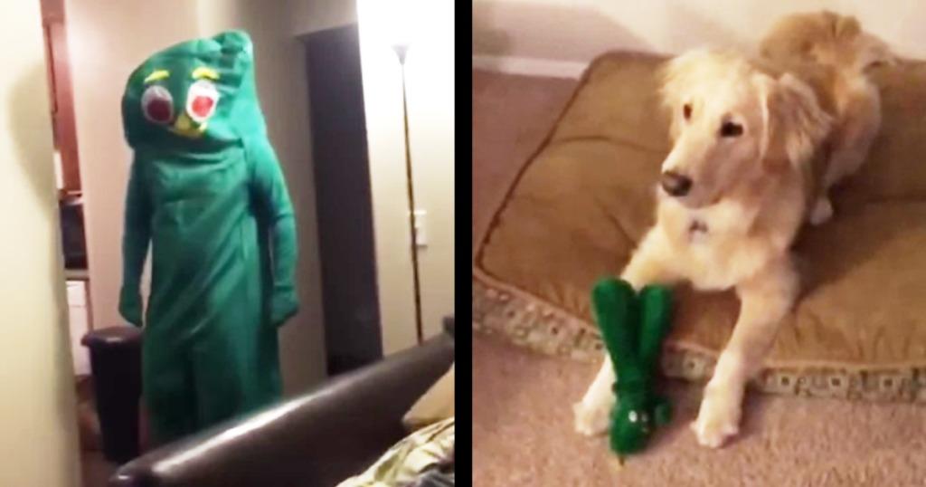 【ハロウィン】お気に入りのオモチャと同じ着ぐるみがサプライズ登場!人生の絶頂に達した犬の反応が可愛すぎるwwwwwwww