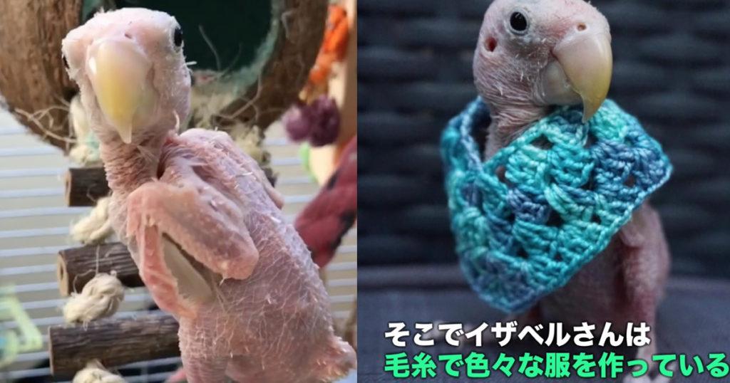 ウィルス性疾患で羽毛が無いインコ。寒さを防ぐための飼い主さんの優しい心遣いが話題に!